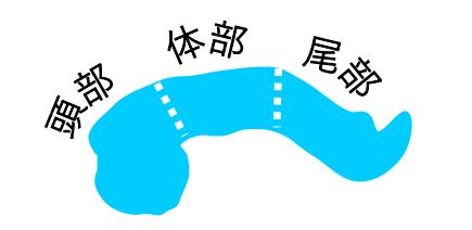 膵頭体尾部1